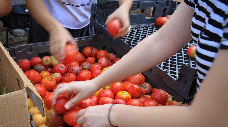 Students share College-grown tomatoes at the Mobile Market.